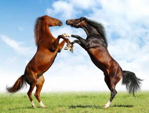 caballos_sin_marca