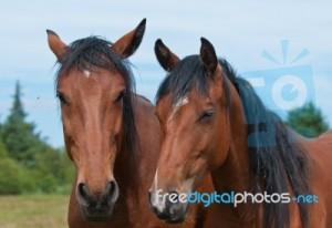 caballos_marca